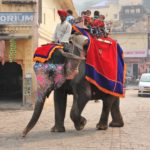 Indien Fort Amber Elefant © Women Travel
