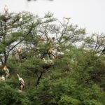 Indien Keoladeo Nationalpark Vögel© Women Travel