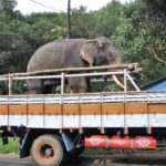 Kerala Elefant © Women Travel