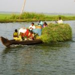 Indien Sueden Schiff mit Gras in den Backwaters © Women Travel