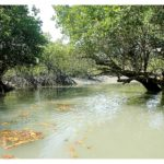 Indien Sunderbans © India Tourism