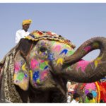 Indien - dekorierter Elefant in Rajasthan © India Tourism