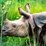 Nepal im Chitwan Nationalpark © Women Travel