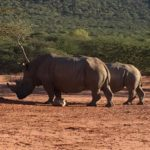 Namibia - Rhino © Women Travel