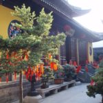 China - Tempelbaum © Women Travel